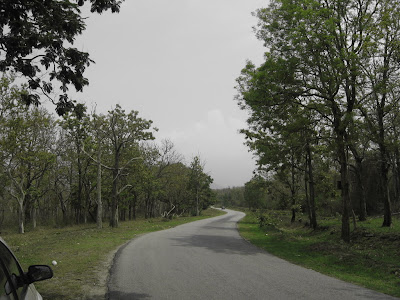Roads inside Bandipur forest