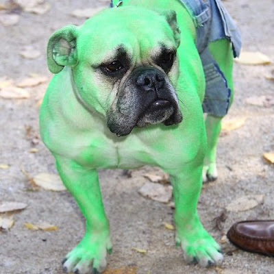 I Have Seen The Whole Of The Internet: Hulk Dog Costume
