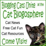 Cat bloggers are the best