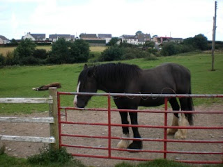 Two of the horses at the Dyfed Shires & Leisure Farm in Eglwyswrw, Wales