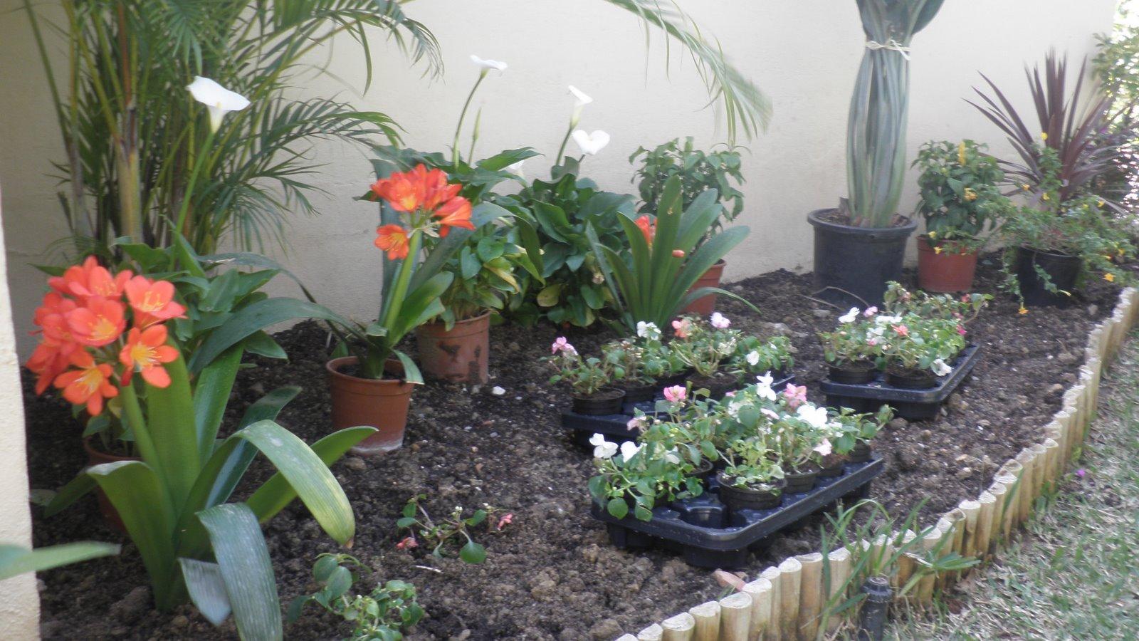 jardinbio jardin peque o especies y cantidades