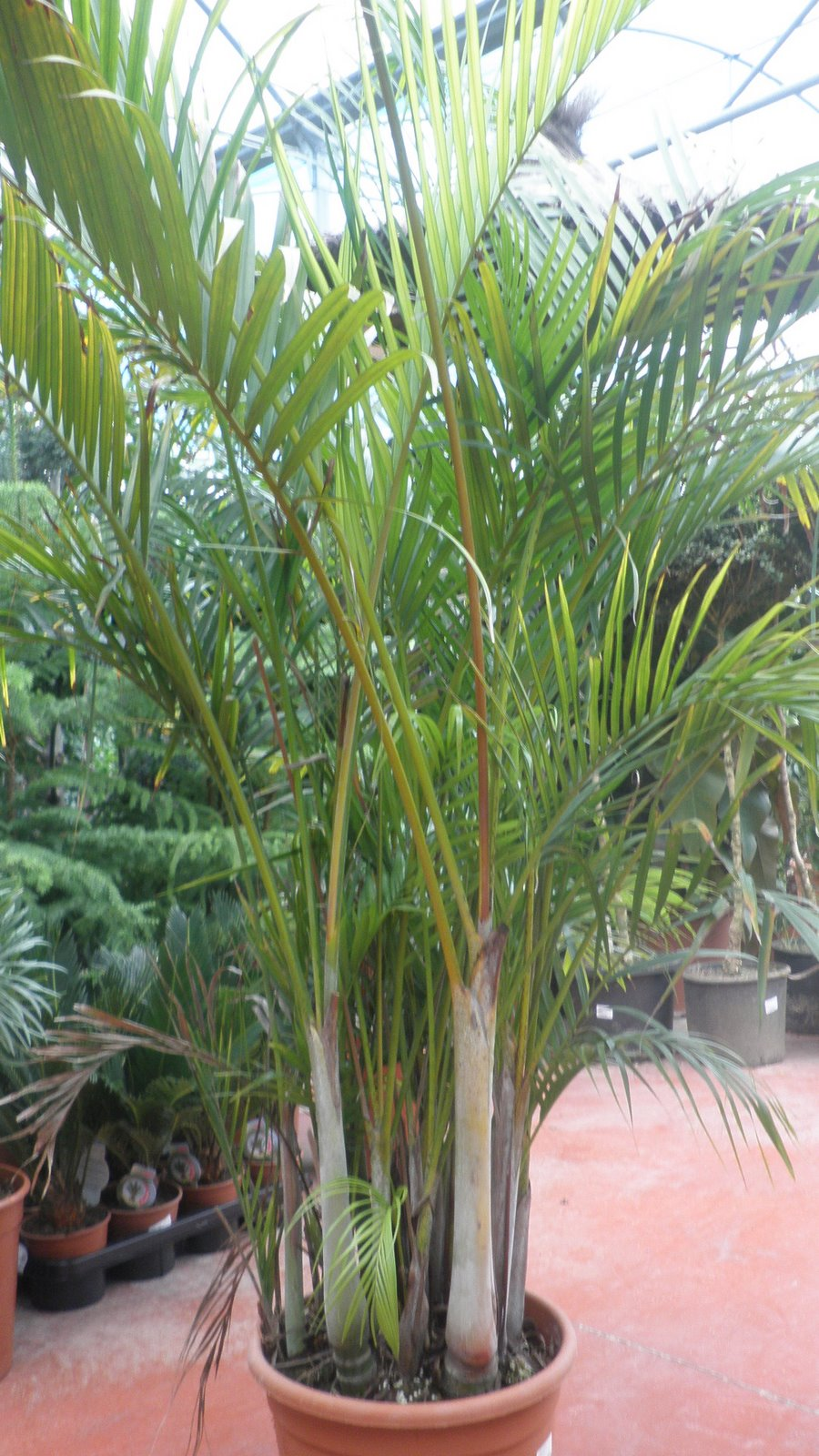 Jardinbio Plantas De Sombra Interior - Plantas-de-sombra