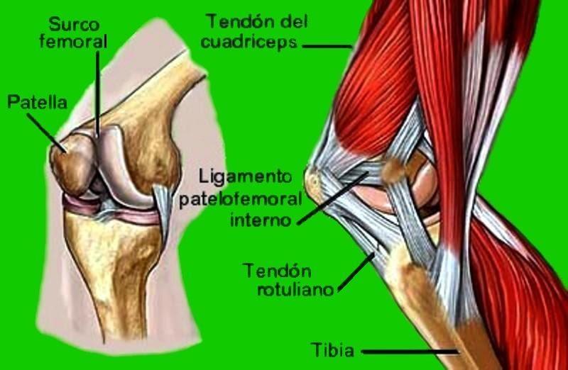 El blog de Francisco Gilo: Biomecánica de la rodilla