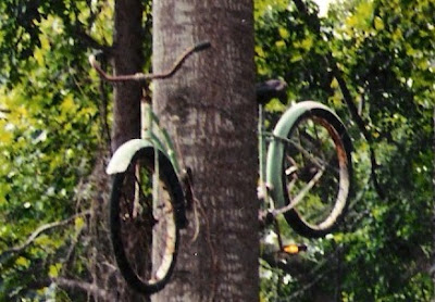 Image of bike stuck in a tree in Hattiesburg, Mississippi