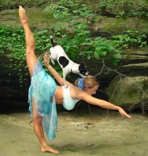 10 Funny Photos Of Animal Yoga Weird Things Weird