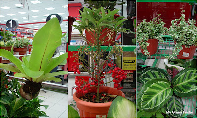 My Green Finder Plant Vendors Ace Hardware Ikano