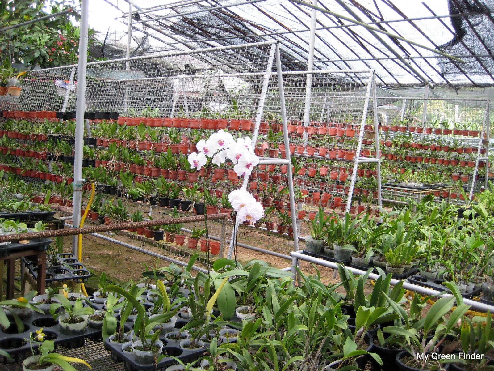 Plant Condition Rating 4 50 The Orchids Are All In Good