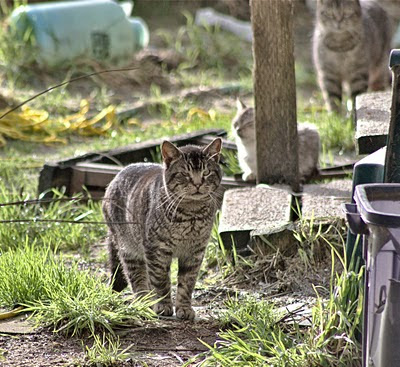 Skeptical Cat takes the lead, with Silver Tabby and Freda 2 photo