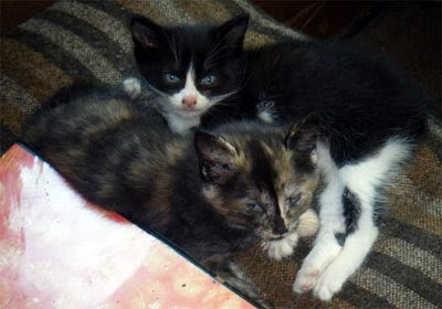 two spring feral kittens photo