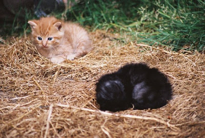 two feral kittens photo