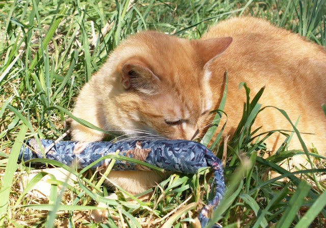 Gadget the fearless feral cat enjoys some play time with a homemade cat toy called a Snakey Mouse, fun!