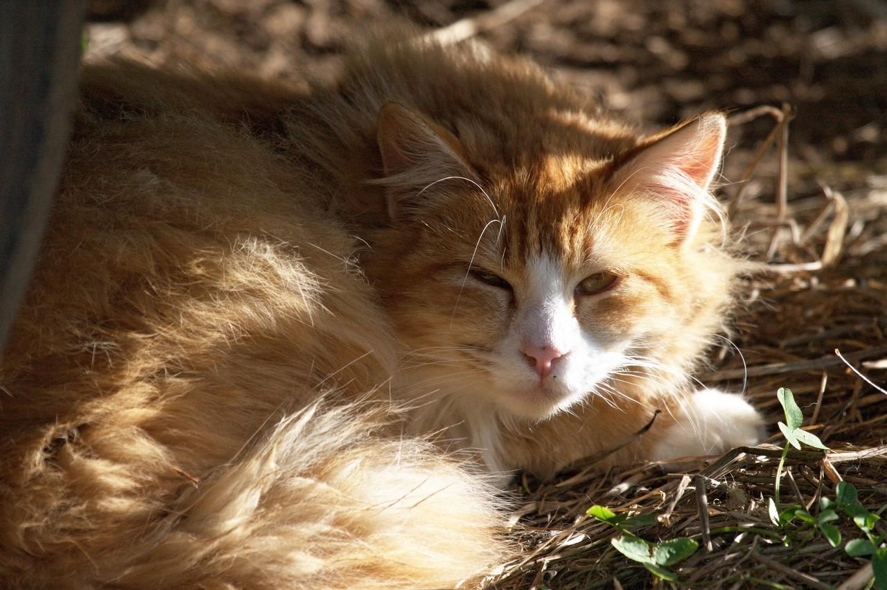 Fluffy Orange-Beige-Ginger Kitten - Feral Kitten Photo Of ...  |Fluffy Orange Kittens