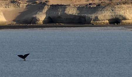 cola de ballena en el Doradillo