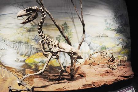 Fosiles de las distintas eras geológicas en el MEF
