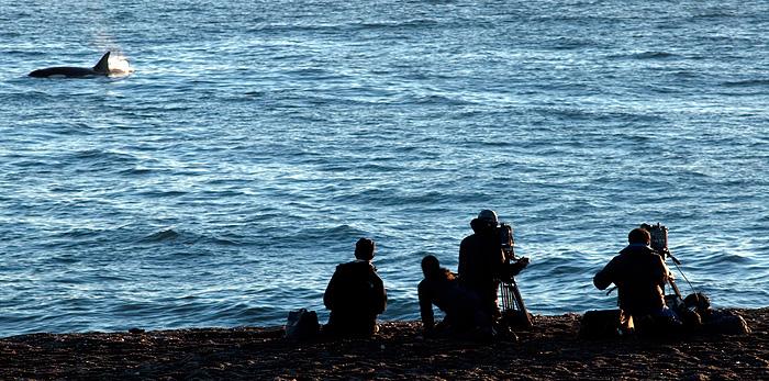 Documentalistas fotografiando Orcas en Punta Norte Península Valdés