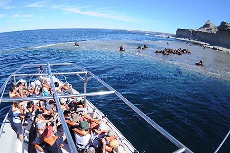 Paseo nautico Lobería punta piramides crias de lobo marino en Península Valdés