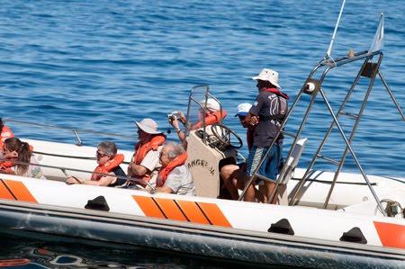 Paseos Náuticos en Puerto Pirámides. Tour obligado en Península Valdés