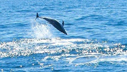 Avistaje de Delfines desde Madryn - Proyecto Iris
