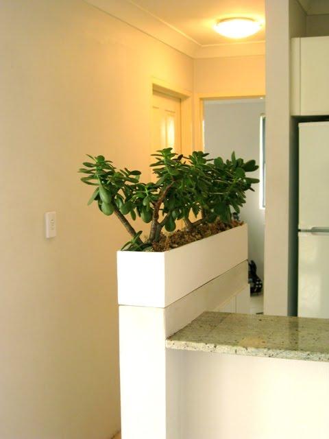 My custom indoor planter box | Ecocentric