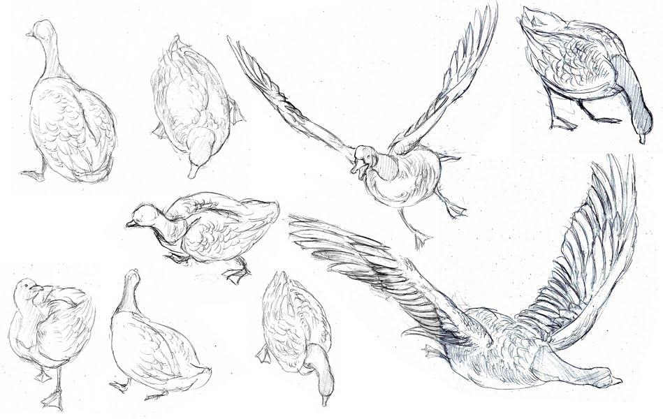 Chicken Wing Cartoon. Nigel - Rio Wiki - MTM