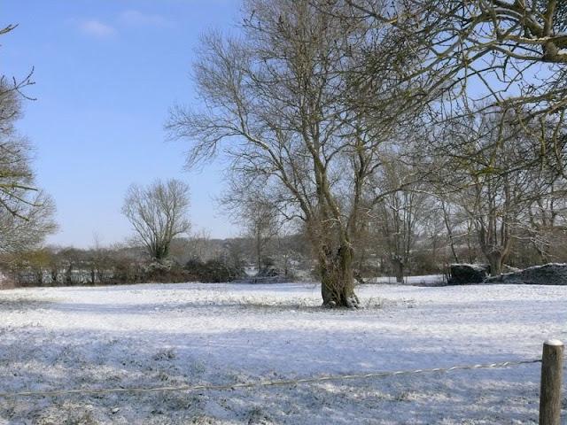 Un pré sous la neige