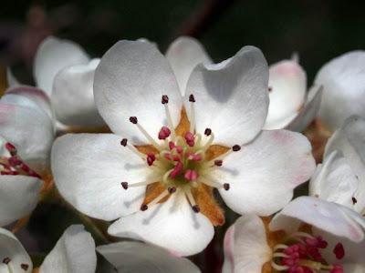 http://2.bp.blogspot.com/_jzsJXg_-cV4/SmAh5jiJssI/AAAAAAAAC_s/oQJj2wI9I64/s400/flor+del+cerezo.jpg