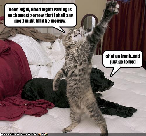 lustige tier gute nacht bilder  tier ausmalbilder