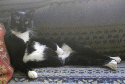 Black cat with white spotted belly reclined like a woman model in a 19th century painting