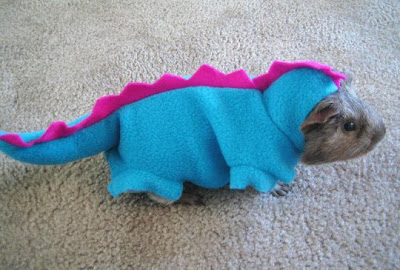Guinea pig in a blue and pink dinosaur costume