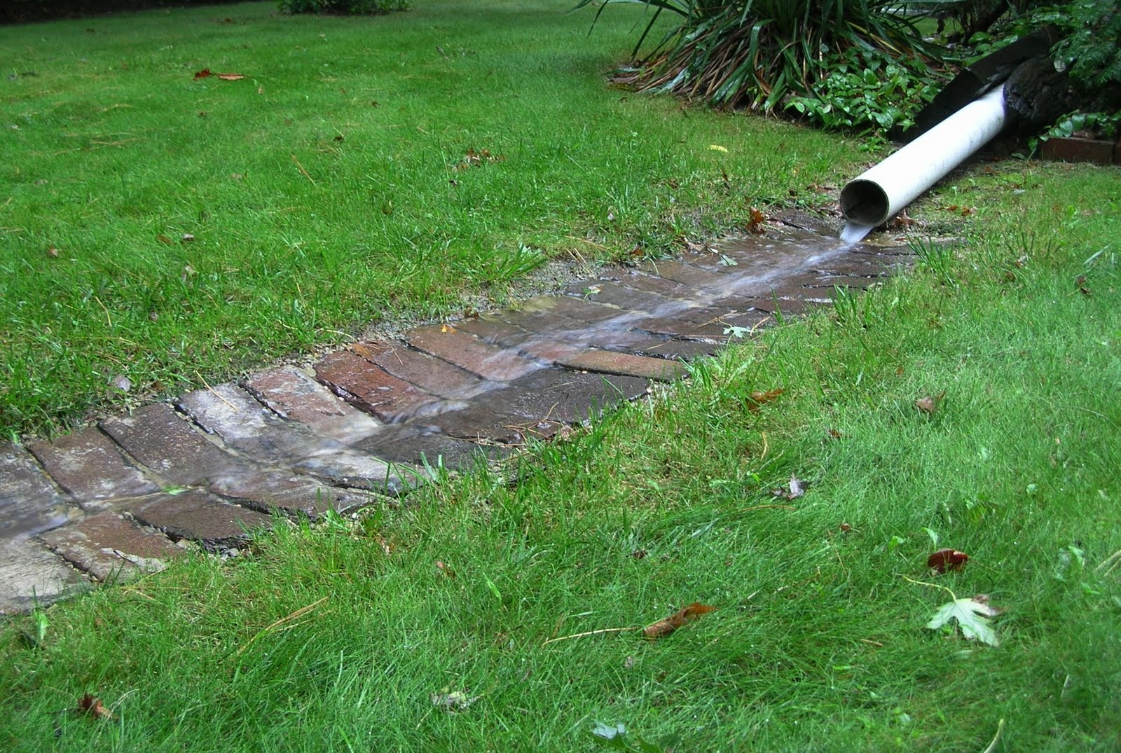Get Your Botany On Rain Garden Rain Barrel And