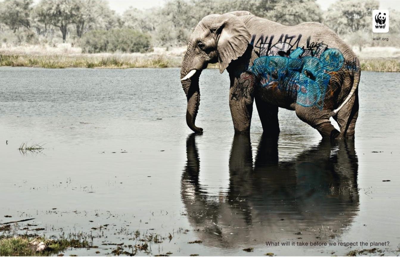 elefante, animal, wwf, grafitti, respeito pelo planeta