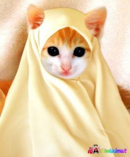 Foto Kucing Lucu Yang Mesra - I.D.D.A.╚