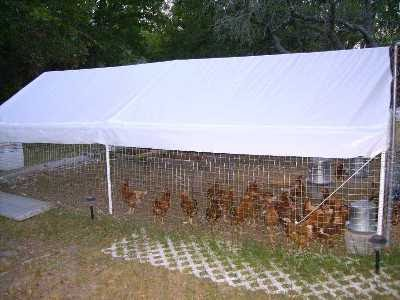 Stealth Survival Prepping Projects Temporary Chicken Coop