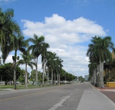 Royal Palms line the streets of Fort Myers Florida