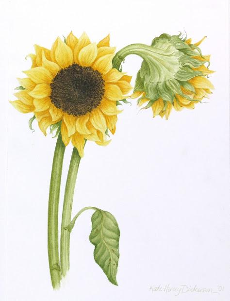 kate dickerson realist art botanical