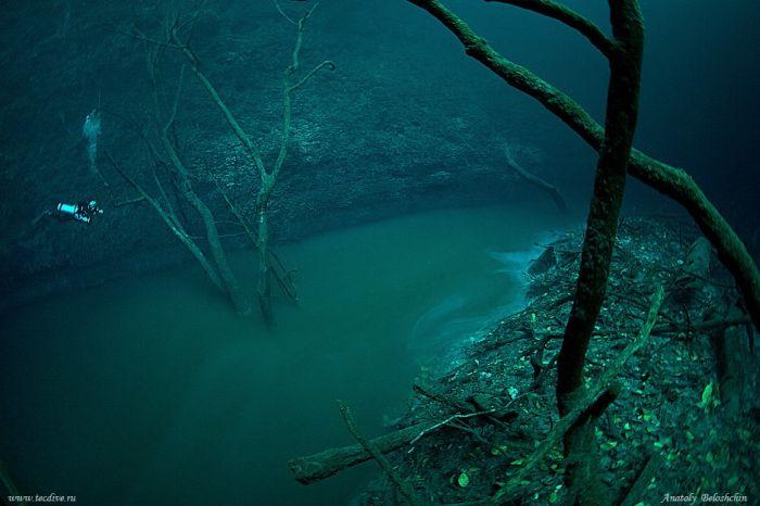 Cenote Angelita Picture
