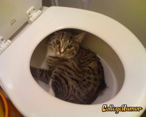 The greatest and unstoppable life changing e books toilet for Commode kitty