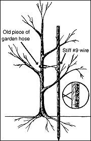 True Soil