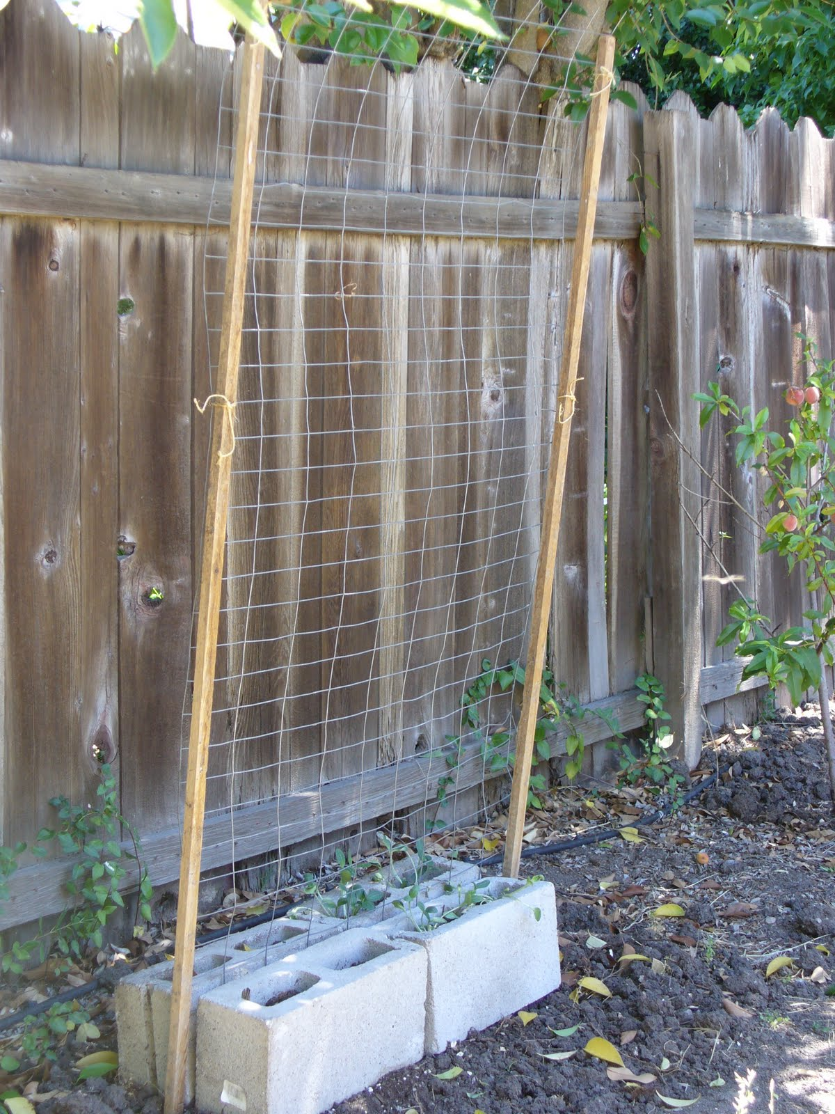 My Ugly Garden Cinder Block Planters