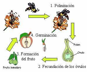 Reproduccion sexual de las plantas polinizacion y fecundacion