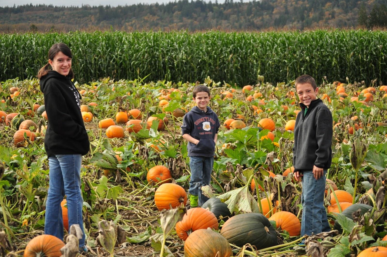 LaTurner Family: Pumpkin Patch