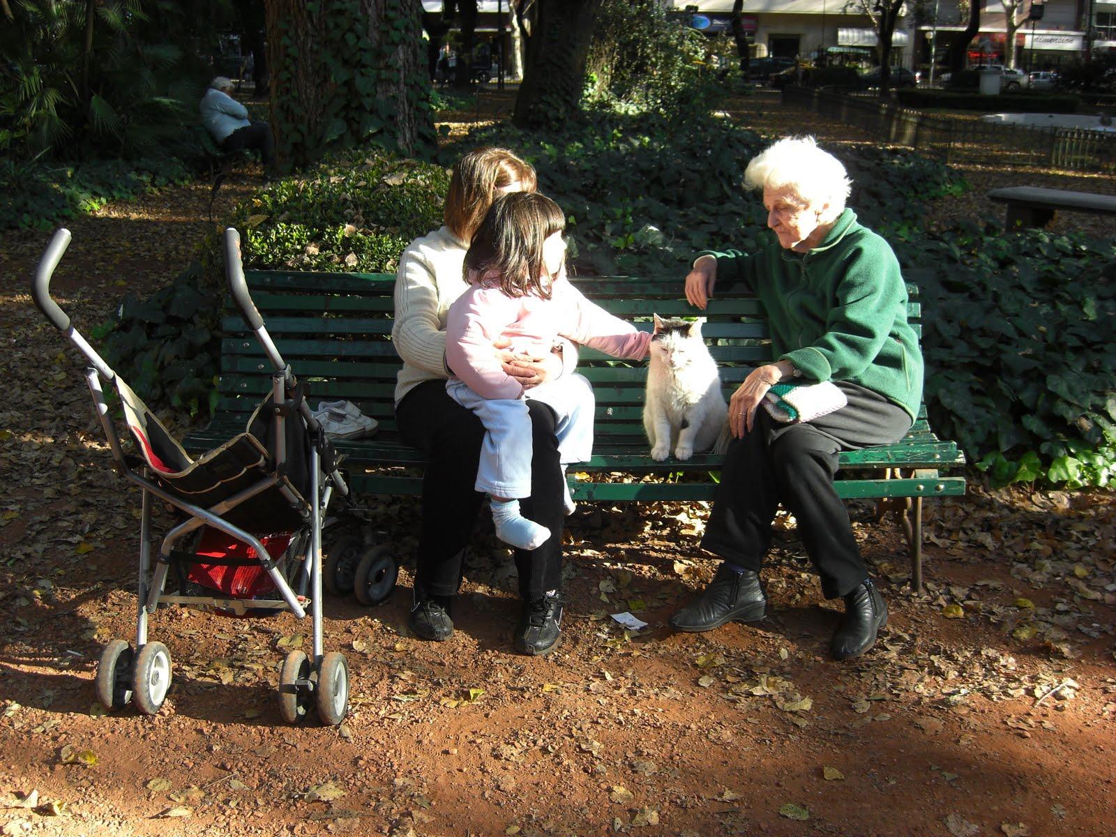 cico: 猫の集う植物園