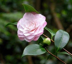 Giardinaggio Fiori.Giardinaggio Fiori Piante Giardinaggio Quando Potare I Fiori Di