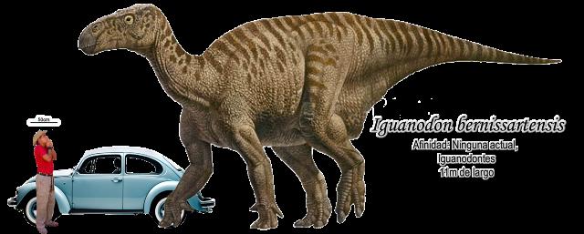 Iguanodon bernissartensis a escala.