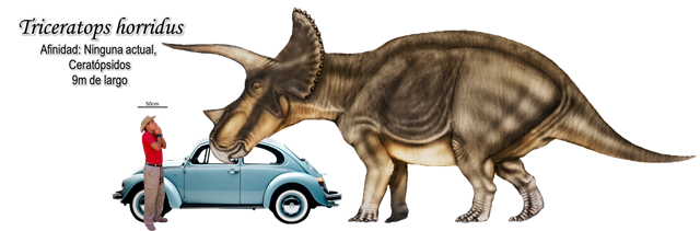 Triceratops horridus a escala.