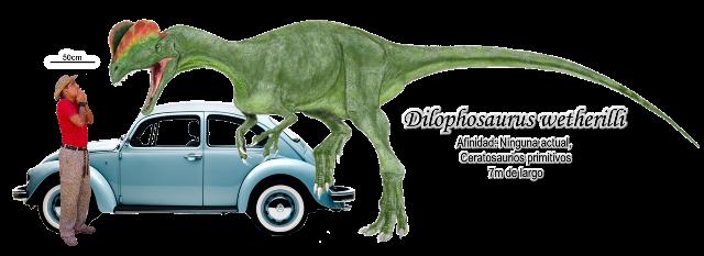 Dilophosaurus wetherilli a escala.