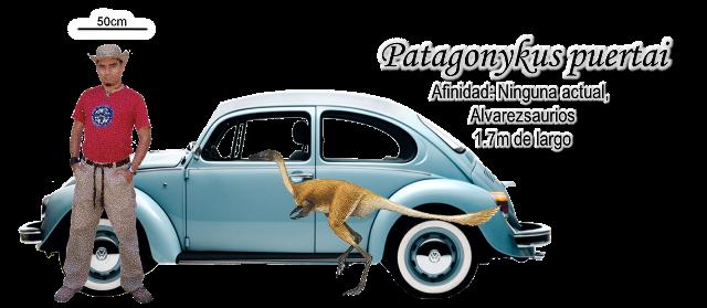 Patagonykus puertai a escala basado en Mononykus olecranus.