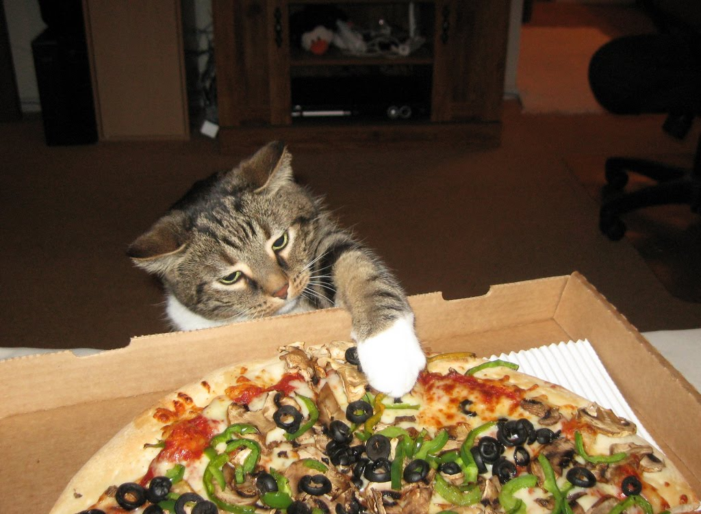 The Cat S Meow I Can Haz Pizza