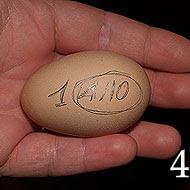 occorre segnare da un lato dell'uovo la data, il numero 1...