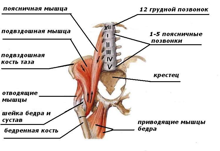 Болят мышцы спины под лопатками